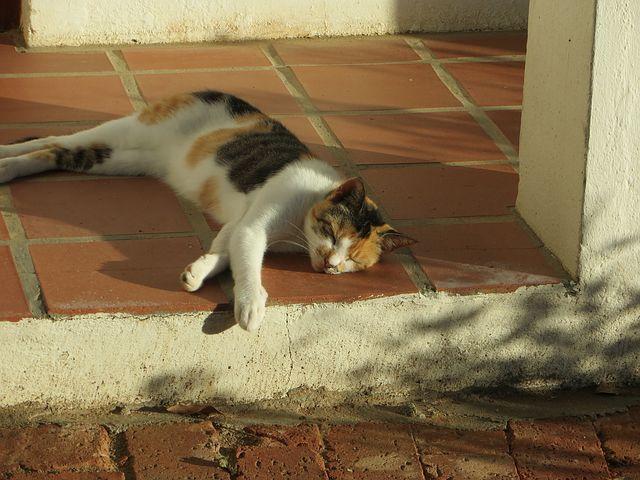 sleeping-cat-1913336__480